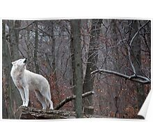 Howling Arctic Wolf Poster