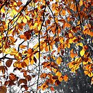 Autumn Leaves  by Xandru
