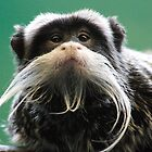Emperor Tamarin by Sheila Smith