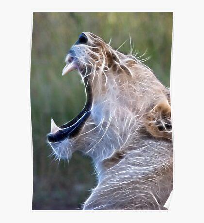 Female Lion Yawn - Enhanced Poster