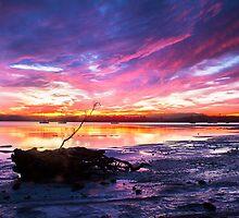 Colourful Sunrise at Cockle Bay by Cornelia Schulz