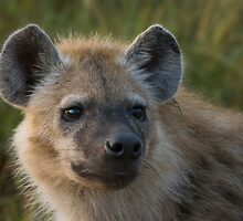 Young Hyena by Gerry Van der Walt