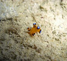 Super Nudi cartwheel by Michael Powell
