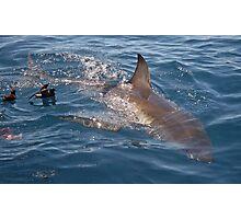 The beautiful Great White Shark Photographic Print