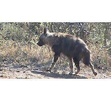 Sneaking off - Brown Hyena Photographic Print