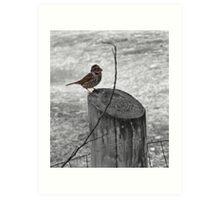 selective sparrow Art Print