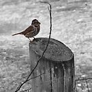 selective sparrow by rebecca smith