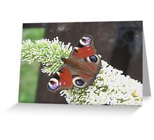Butterfly Days Greeting Card