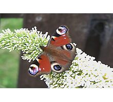 Butterfly Days Photographic Print