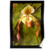 ORCHID RIBBONS Poster