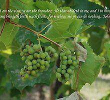 John 15:5 by Sue Ellen Thompson