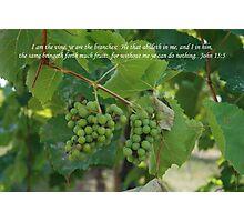 John 15:5 Photographic Print