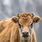 Cow 1 by Thomas Young