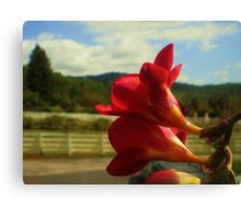 Total Package Canvas Print