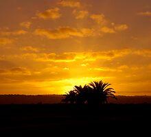 Sunrise over Suburbia. by Aussiebluey