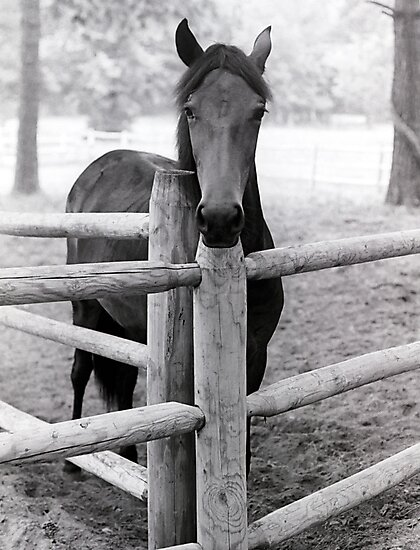 Horse by Jim Haley