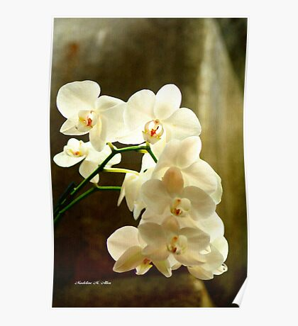 ORCHIDS ON CANVAS Poster