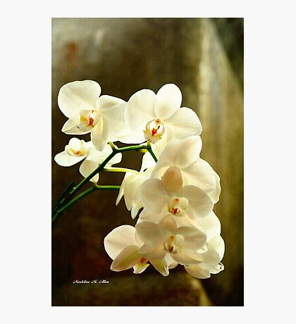 ORCHIDS ON CANVAS Photographic Print