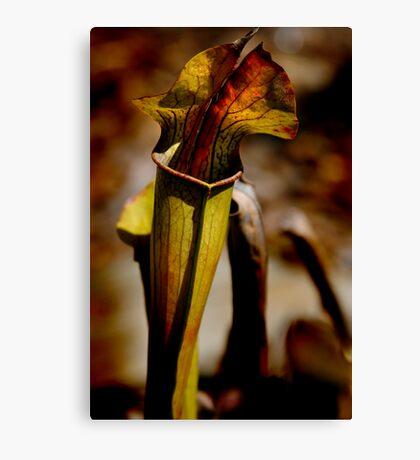 Pitcher-Plant Canvas Print