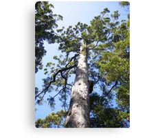 In the Karri Forest Canvas Print