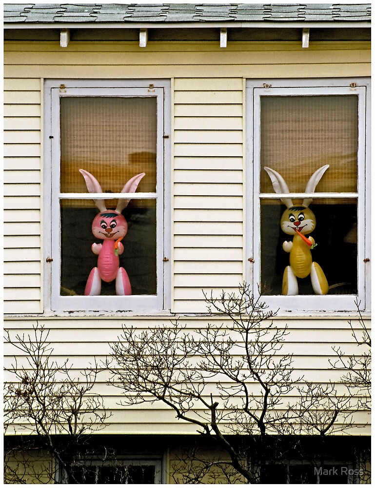 New Jersey Bunnies by Mark Ross