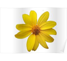 Tiny Yellow Flower Poster
