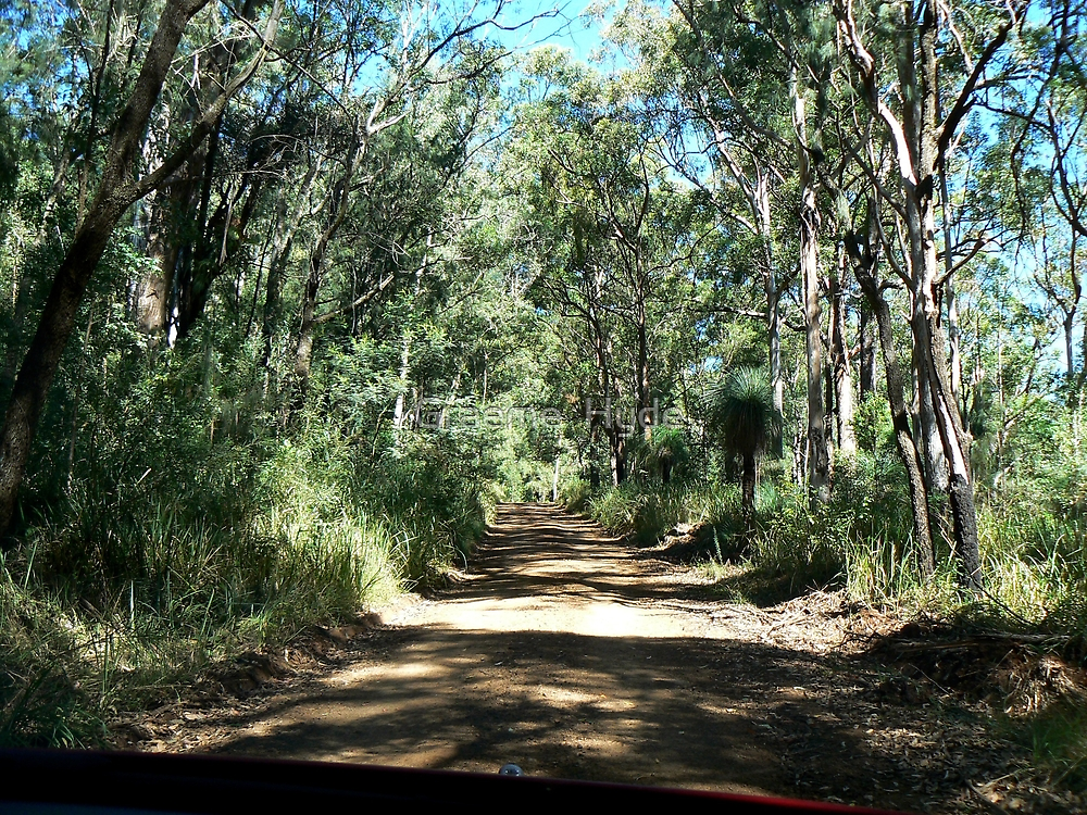 Road up Spicer's Gap by Graeme  Hyde