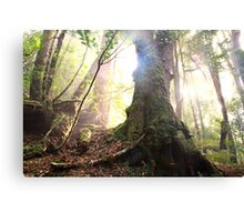Enchanted Forest, Franklin-Gordon Wild Rivers National Park, Tasmania  Canvas Print