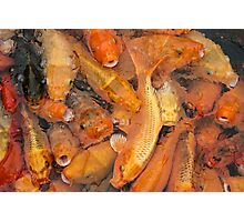 Fish soup Photographic Print