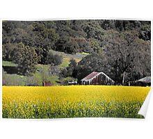 Napa Valley Landscape Poster