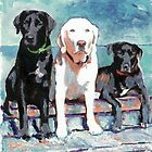 Waiting For Doc by RD Riccoboni portrait of three labs by RDRiccoboni