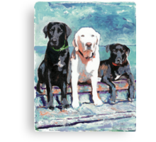 Waiting For Doc by RD Riccoboni portrait of three labs Canvas Print
