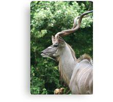 Long Horns Canvas Print