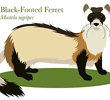 Black-Footed Ferret by KityFaceStudios