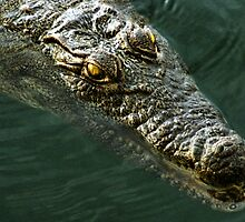 African Crocodile by Carole-Anne