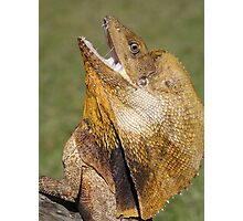 Frilled Neck Lizard Photographic Print