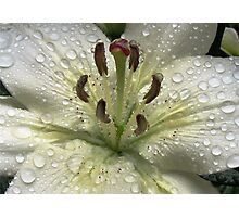 Immaculate - Lily With Raindrops Photographic Print