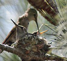 the hummingbird family of Zip 1 by Lenny La Rue, IPA