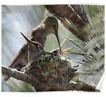 the hummingbird family of Zip 1 Poster