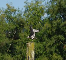 Seagull Takes Over Post Part 3 by Happystiltskin