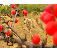 spike with red berries Photographic Print