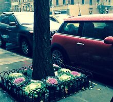Snowy Cars in NYC by MissCellaneous
