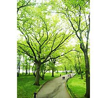Lush Trees in Central Park NYC Photographic Print