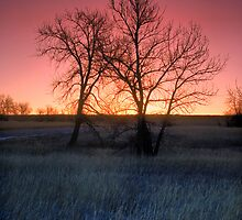 Winters Morning Warmth by John  De Bord Photography
