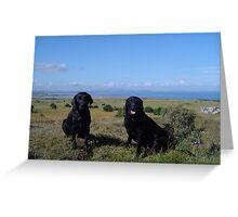 Two Labradors Greeting Card