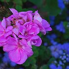 Pink and Blue by Gerda Grice