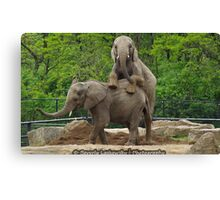 Elephants at Pittsburgh Zoo Canvas Print
