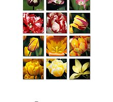 Tulips by Alison Cornford-Matheson