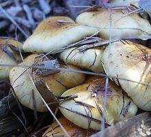 Mushrooms by lizjensen