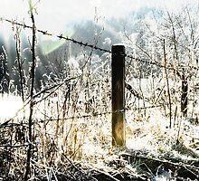 Dark fence by Craig Maguire